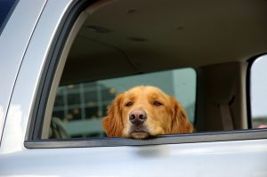 Pets can provide great benefits for truck drivers on long hauls.